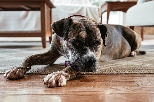 Consigli per abituare il cane alla nuova casa