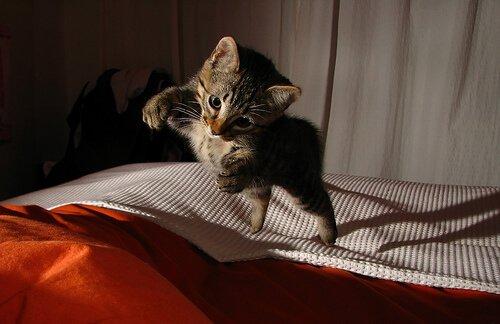 un micetto salta sul letto