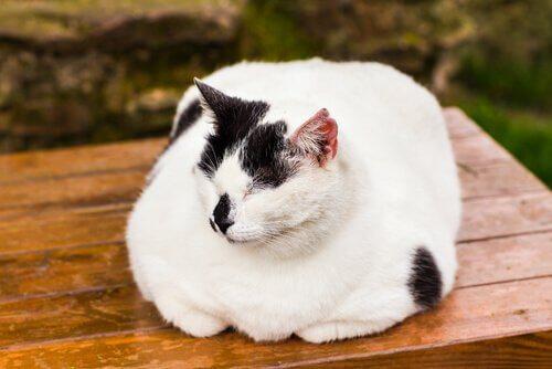 un micio bianco e nero dorme su una panca di legno