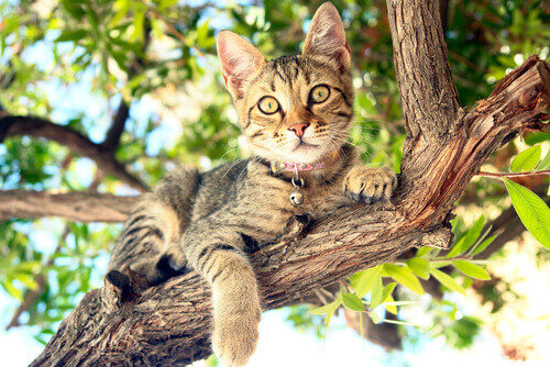un micio riposa sul ramo di un albero