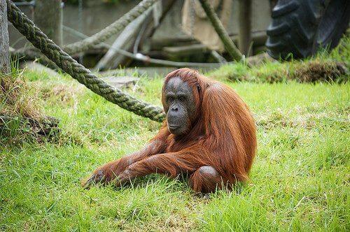 E se l'uomo non discendesse dalle scimmie?
