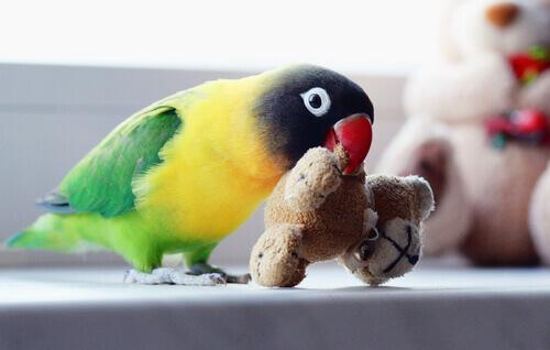Pappagallino gioca con dei piccoli peluche