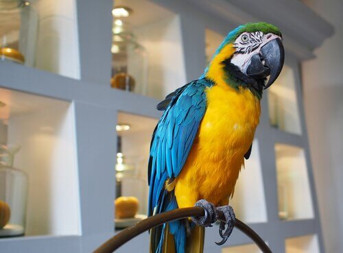 Psittacosi nei pappagalli: cause, sintomi e cure