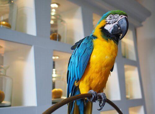 un pappagallo ara in un salotto