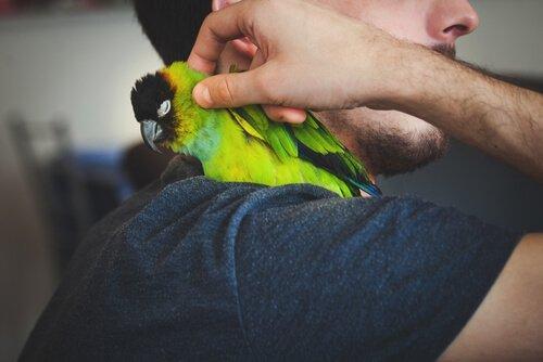 un pappagallo verde con psittacosi abbracciato dal padrone