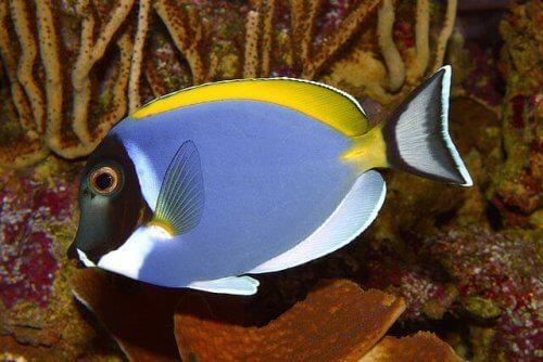 7 pesci d'acqua calda che dovete conoscere