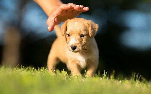 un piccolo cane in giardino sotto la mano del padrone
