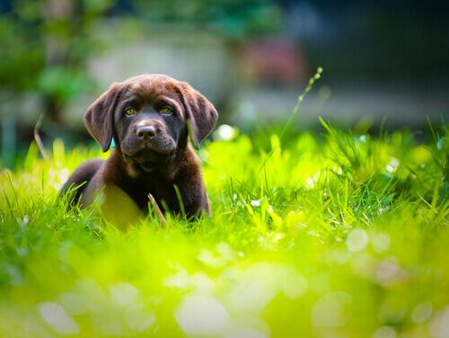 Cane si riposa tra l'erba alta