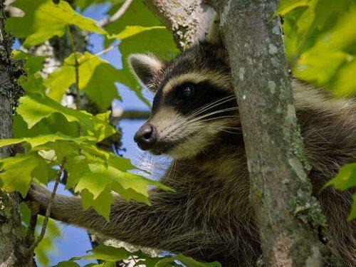 9 animali che vivono nella foresta