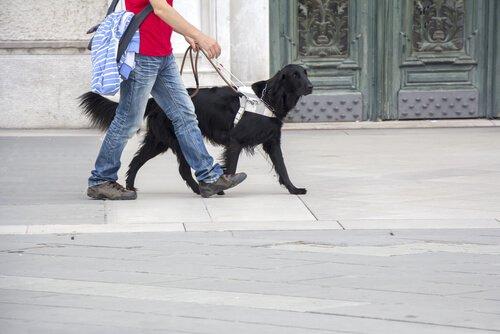 Cane guida nero