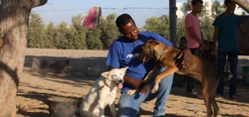 un veterinario alle prese con due animali di un rifugio