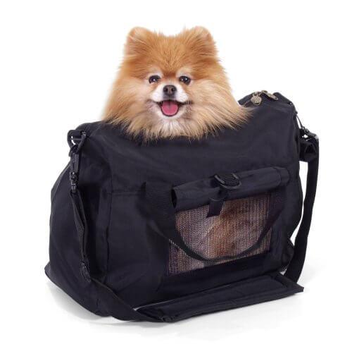 Borsa trasportino con dentro un cagnolino