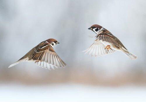 una coppia di uccelli innamorati volano assieme