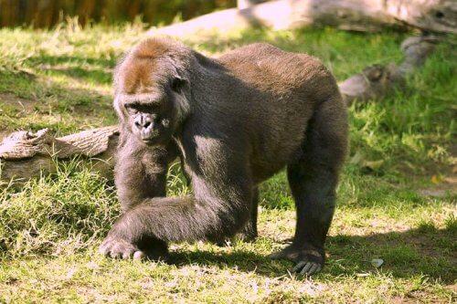 Gli animali più forti del mondo che bisogna conoscere