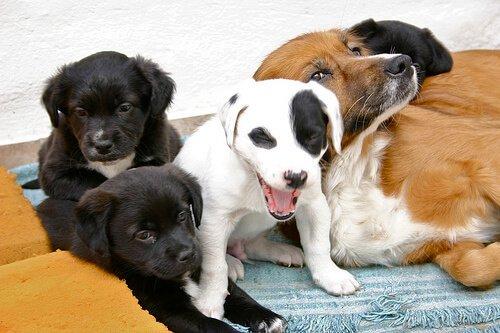 Il puerperio nelle femmine di cane