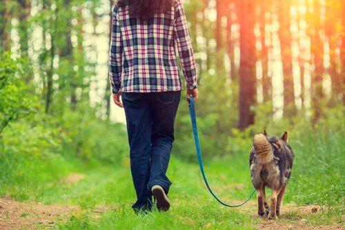 4 modi per migliorare la passeggiata con il cane