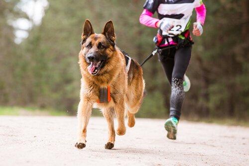 una ragazza corre assieme al proprio cane in una competizione
