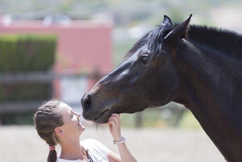una ragazza gioca sorridente con un cavallo nero