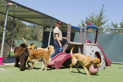 una ragazza intrattiene e gioca con dei cani in un parco giochi