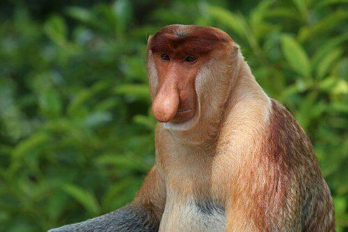 8 specie di scimmie straordinarie che non potete perdervi