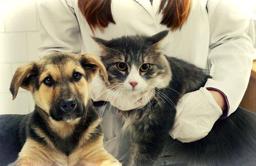 una veterinaria con un gatto in braccio e un cucciolo di pastore tedesco