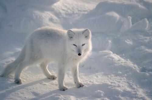 8 animali che resistono al freddo estremo