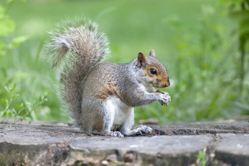 scoiattolo su un tronco