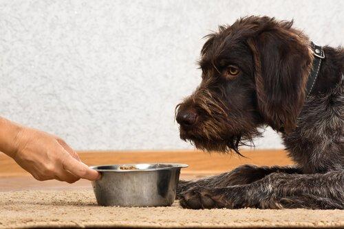 uomo porge ciotola con il mangime al suo cane