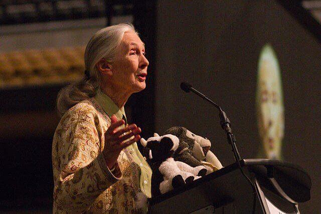 Jane Goodall durante una conferenza in tutela delle scimmie