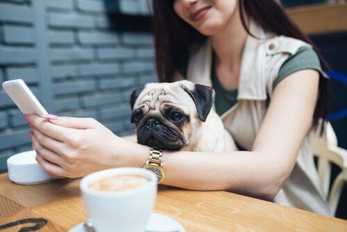 I Millennials e gli animali: una relazione atipica