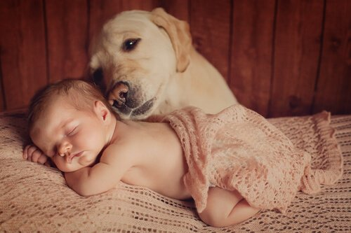 Fare le presentazioni tra bebè e animale domestico
