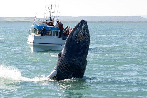 Paesi in cui è possibile avvistare le balene