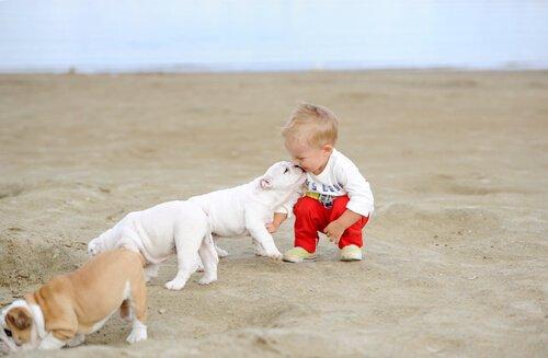 bambino in spiaggia con cuccioli di bulldog