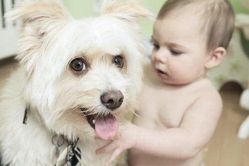 bebè con cagnolino
