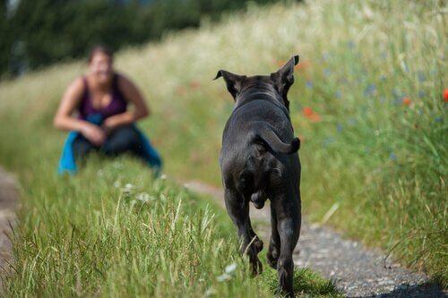 Cane corre verso la padrona