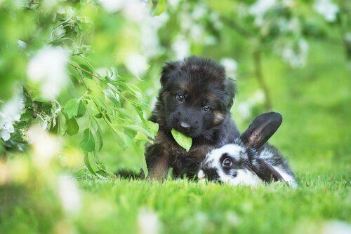 cane e coniglio giocano assieme in un prato