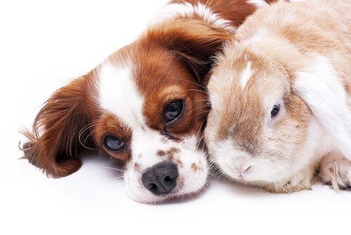 cane e coniglio sdraiati assieme