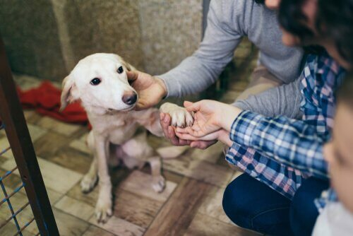 cane in un rifugio per animali con persone