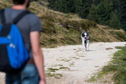 Cane risponde correndo al richiamo del padrone