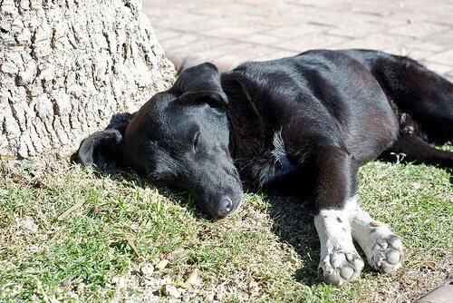 cane sdraiato sotto albero