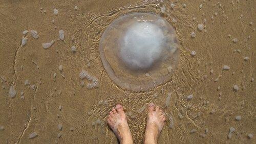 Come reagire di fronte ad una medusa?