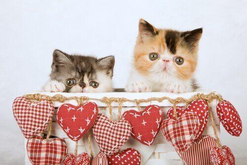 Gatti in un cesto con cuori