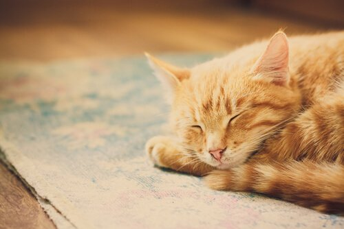 gatto che dorme sul tappeto per terra