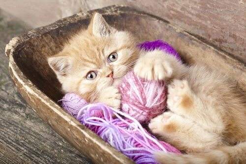 gatto con gomitoli come giochi