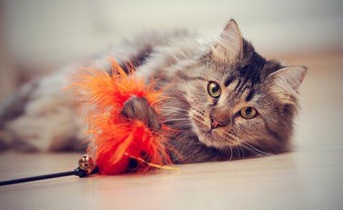 gatto sdraiato che gioca con piuma arancione