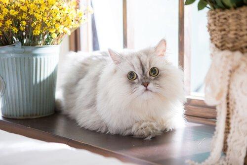 Far adattare il gatto alla nuova casa