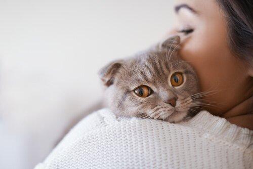 gatto in braccio a padrona
