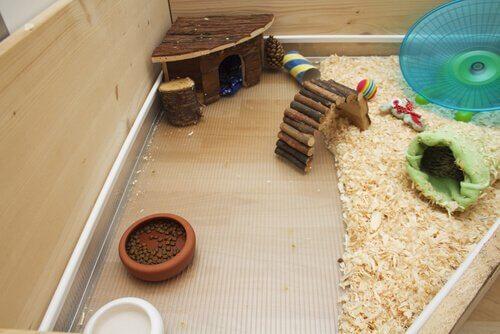 giochi nella gabbia di una cavia domestica