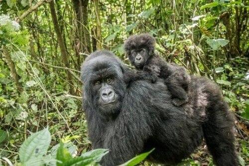 I santuari dei primati in Italia