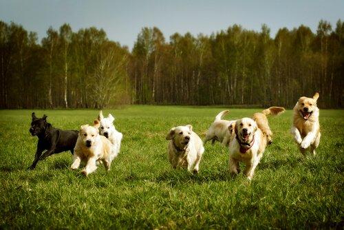 Come insegnare al cane un richiamo infallibile